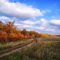 Краски осени :: Александр Афромеев