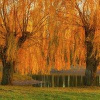 Золотые деревья :: Вера Бережная