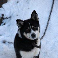 Любимый пес:) :: Евгения Пестерева