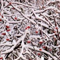 Первый снег зимы 2013 года :: Анатолий Зубанов