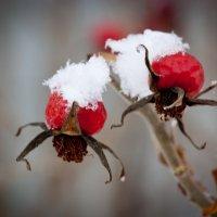 первый снег :: Юлия Филиппова