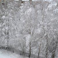 первый снег............ :: Светлана