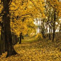 Осень :: олександ