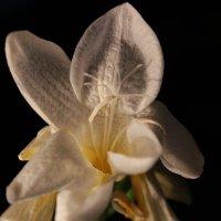 цветок :: kirill Orlov