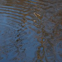 Линии на воде. :: Евгений Поляков