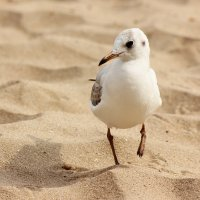 Чайка ходит по песку,.... :: Людмила Минтюкова
