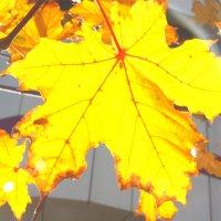 Солнце в каждом листе :: Yuliya Lipetsk