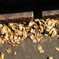 Осенние листья :: Вадим Гудин