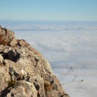 Жизнь над облаками :: Ирина Акимова