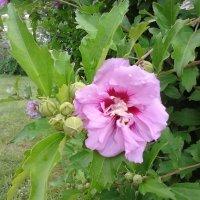 цветok :: Lyubov Po