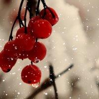 Слёзы уходящего декабря :: Александр | Матвей БЕЛЫЙ