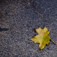 одинокий листочек :: Ольга Адаменко