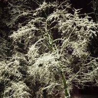 И выпал снег :: Николай Андреев