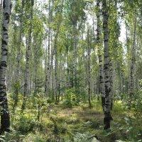 лес :: Александр 6769