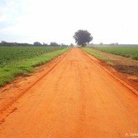 Оранжевая дорога в Алабаме :: Arman S