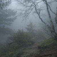 Туман. :: Марина Меновщикова