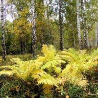 Осенний лес :: Геннадий Ячменев