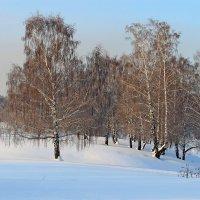 Рыжая  зима. :: Vlad Borschev