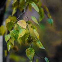 листья :: Владимир Вашкуров