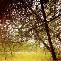природа :: мария Федюнина
