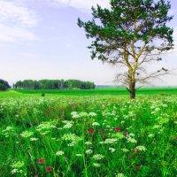 Травы, травы.... :: Геннадий Ячменев