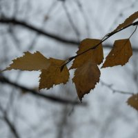осень :: андрей Степанов