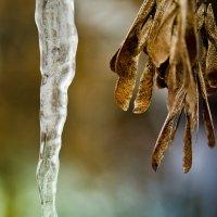 Зима и Осень. :: Edward J.Berelet