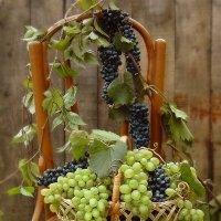 С виноградом :: Lara