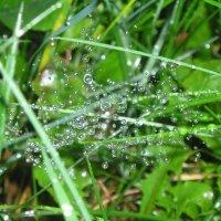 Ожерелье дождя :: Марина Гимбург