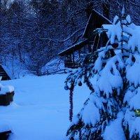 Утро нового года :: Serega Денисенко