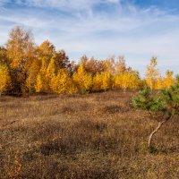 Осенний день. :: Юрий