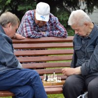 Шахматисты :: Михаил Петрик