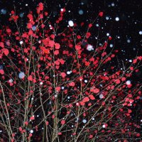 Ночь,рябина,вспышка,снег. :: Виталий Дарханов