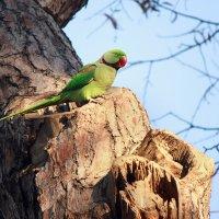 papağan :: Selman Şentürk