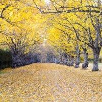 Осень..... :: Julia Rodionova