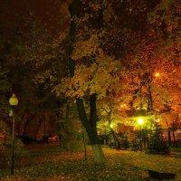 Осенний парк :: Николаева Наталья