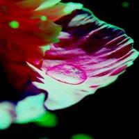 Капелька росы :: Кира К