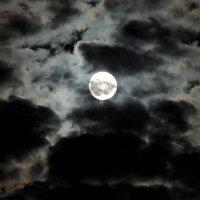 Луна :: ФотоКот