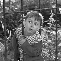 Поспели вишни в саду у дяди Вани? :: Ирина Данилова