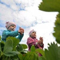 Дети и ягоды :: Oleg Puhaev