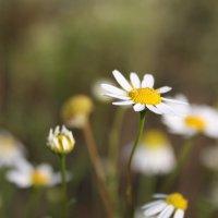 цветок :: Андрей Петренко
