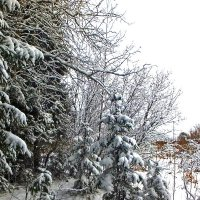 Вот и зима пришла... :: Юрий Митенёв