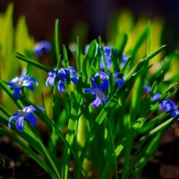 голубые огоньки :: gribushko грибушко Николай
