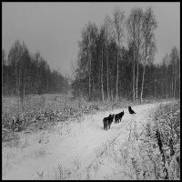 В непогоду :: Николай Белавин