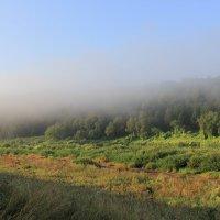 Утро на реке Угре. Убегающий туман. :: Анастасия Иванова