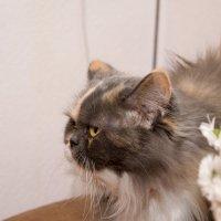 букет для кошки :: Анна Головашкина
