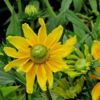 Желтый цветок :: Ольга Иргит