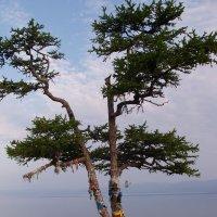 Шаманское древо :: JulO Юлия