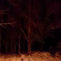 Тёмный лес :: warsarhiv 1939-1945