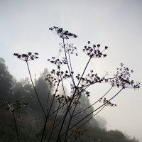 Туманный рассвет играет с природой :: Анастасия Иванова